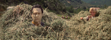 man's head sticking out of haystack